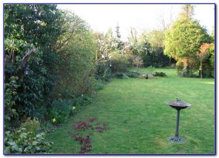 Suburban Lawn And Garden Trees