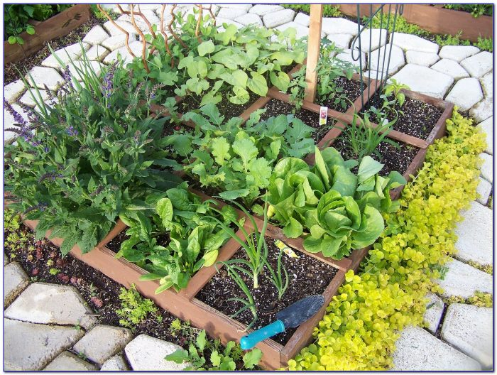 Square Foot Gardening Spacing Arugula