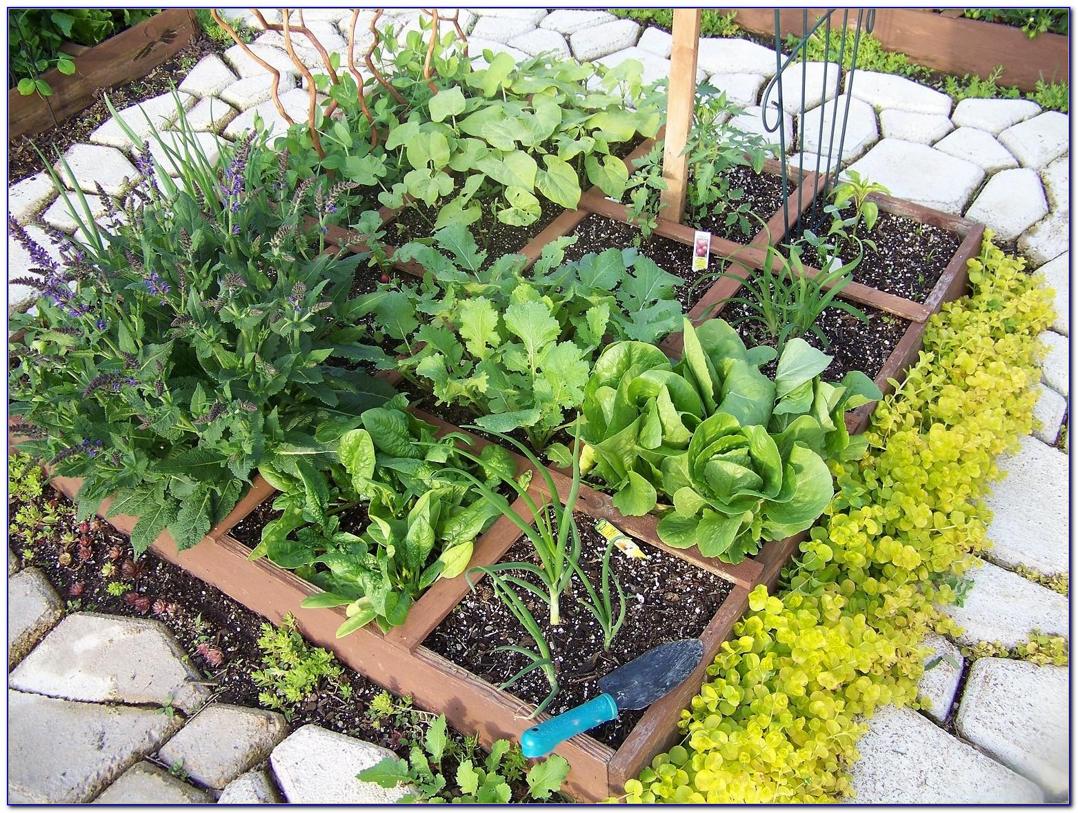 Square Foot Gardening Spacing Arugula