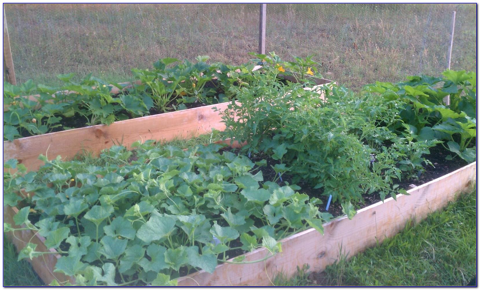 Square Foot Gardening Spacing Corn