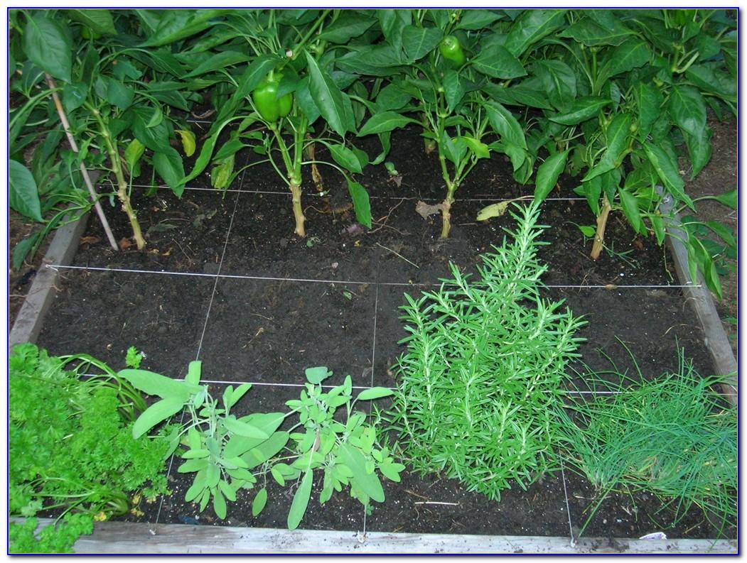 Square Foot Gardening Spacing Uk