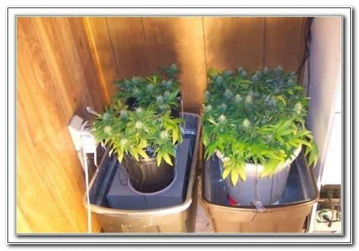 Build Your Own Grow Box Cheap